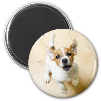 Jack Russel Terrier fridge magnet