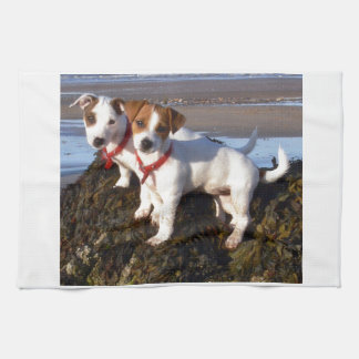 Jack Russell Puppies Towels