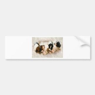 jack russell pups bumper sticker