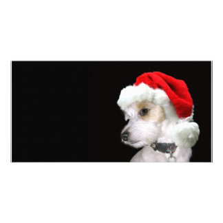 Jack Russell Santa Picture Card