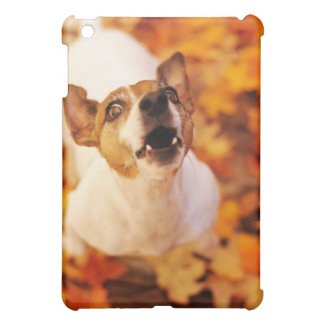 Jack Russell Terrier barking and jumping, Autumn Cover For The iPad Mini