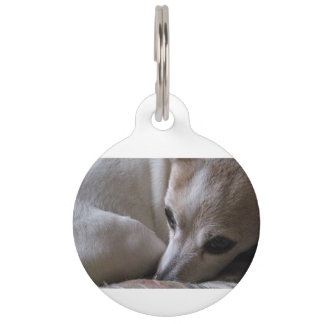 jack russell terrier curled pet tag