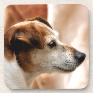 JACK RUSSELL TERRIER DOG COASTER