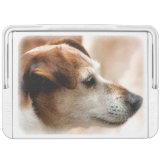 JACK RUSSELL TERRIER DOG COOLER