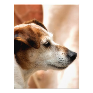 JACK RUSSELL TERRIER DOG FULL COLOR FLYER