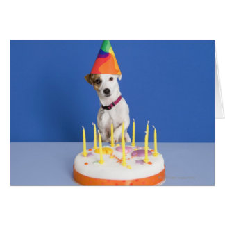 Jack Russell Terrier dog wearing party hat Card