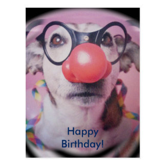 Jack Russell Terrier Happy Birthday Crazy Clown Postcard