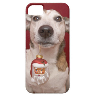 Jack Russell Terrier Holding Christmas Ornament iPhone 5 Covers
