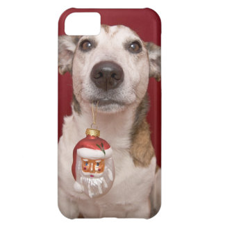 Jack Russell Terrier Holding Christmas Ornament iPhone 5C Case