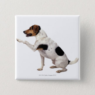 Jack Russell Terrier Lifting Paw 15 Cm Square Badge