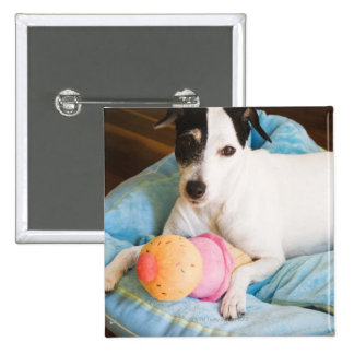 Jack russell terrier lying down 15 cm square badge