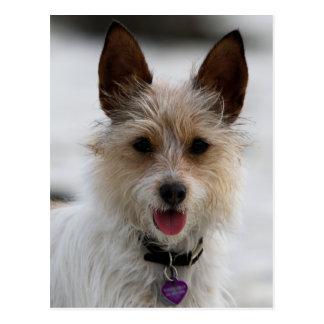 Jack Russell Terrier Mix - Winnie - Oman Postcard