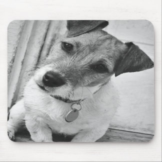 Jack Russell Terrier Mouse Pads