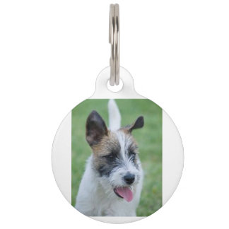 jack russell terrier pet ID tag