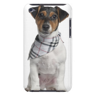 Jack Russell Terrier puppy (4 months old) iPod Case-Mate Cases