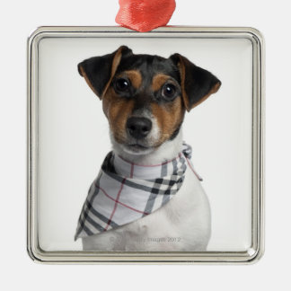 Jack Russell Terrier puppy (4 months old) Metal Ornament