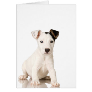 Jack Russell Terrier Puppy Card