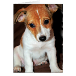Jack Russell Terrier Puppy Dog  Greeting Card