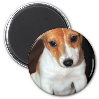 Jack Russell Terrier Puppy Dog Magnet