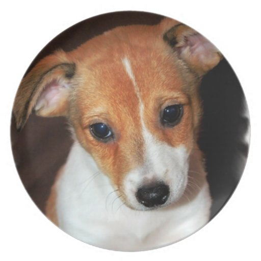 Jack Russell Terrier Puppy Dog Plate