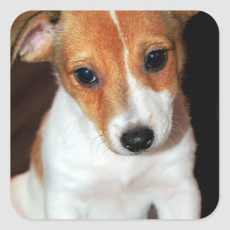 Jack Russell Terrier Puppy Dog Stickers