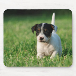 Jack Russell Terrier puppy Mouse Pad
