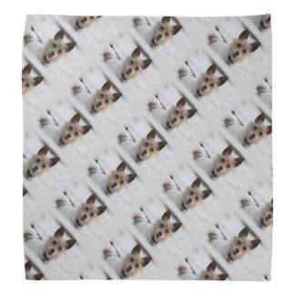 Jack Russell Terrier - Winnie - Oman Do-rag