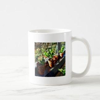 Jade Plants in Greenhouse Coffee Mug