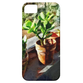 Jade Plants in Greenhouse iPhone 5 Cover