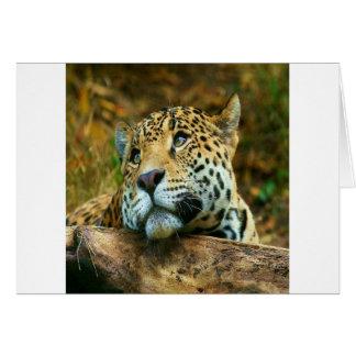 Jaguar Card