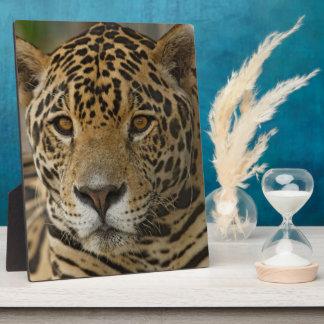 Jaguar feline portrait plaque