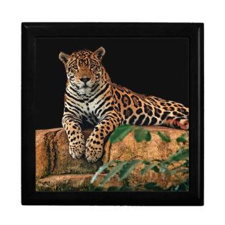 Jaguar Gift Box