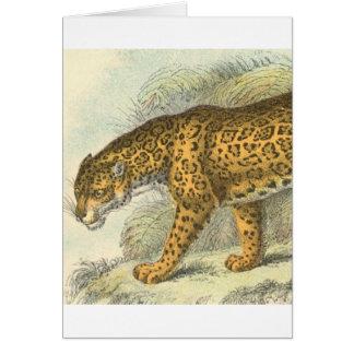 Jaguar Illustration Card