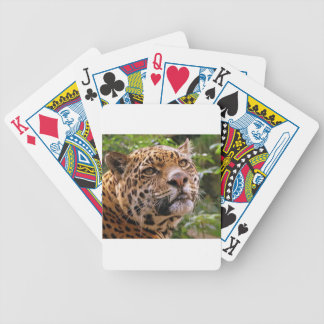 Jaguar Inquisitive Bicycle Playing Cards