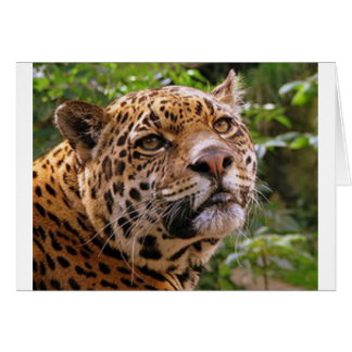 Jaguar Inquisitive Card