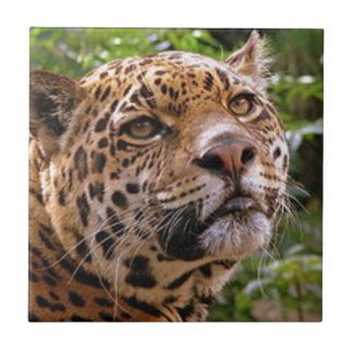 Jaguar Inquisitive Ceramic Tile