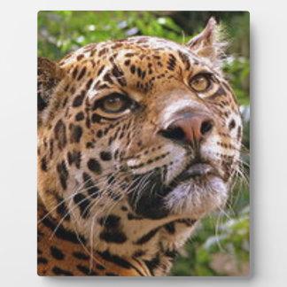 Jaguar Inquisitive Plaque