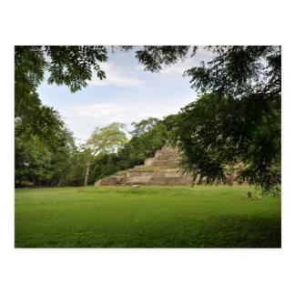Jaguar Mayan Temple Belize Central America Postcard