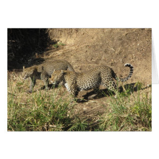 Jaguar mom & juvenile card