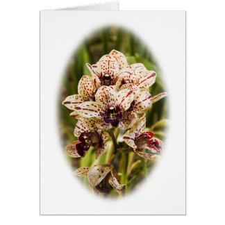 Jaguar Orchid greeting card