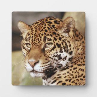 Jaguar Photo Plaque