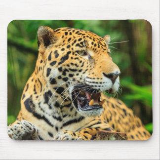 Jaguar shows its teeth, Belize Mouse Pad