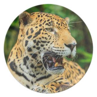 Jaguar shows its teeth, Belize Plate