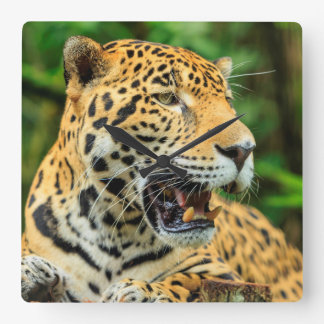 Jaguar shows its teeth, Belize Square Wall Clock