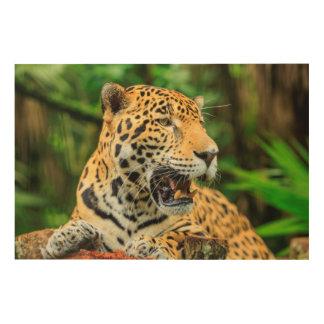 Jaguar shows its teeth, Belize Wood Wall Art