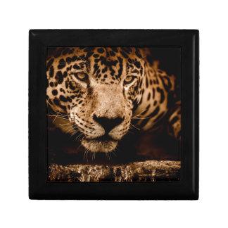 jaguar water stalking eyes gift box