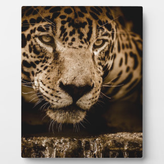Jaguar Water Stalking Eyes Menacing Fearsome Male Plaque