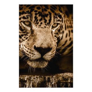Jaguar Water Stalking Eyes Menacing Fearsome Male Stationery