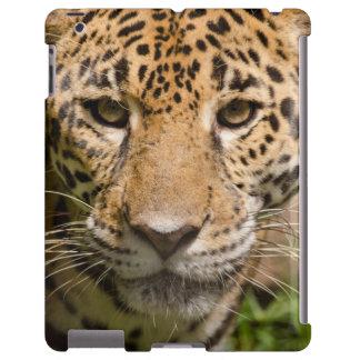 Jaguarclose-up of face