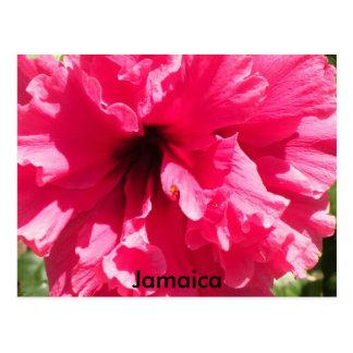 Jamaica Hibiscus Postcard